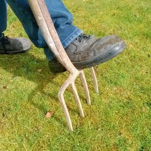 Is Dethatching Good for your Lawn?