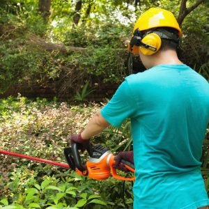 What are the Best Corded Hedge Trimmers for 2021?