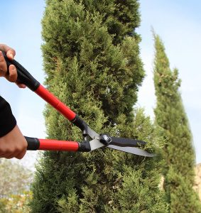 Best Hedge Shears - Reviews and Tips