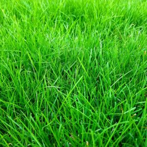 How Soon After It Rains Can I Mow The Lawn?