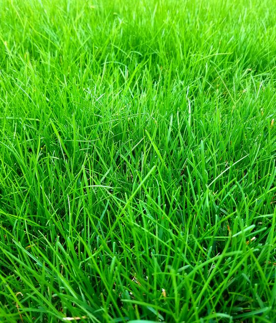 How Soon After It Rains Can I Mow The Lawn