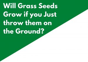 Will Grass Seed Grow if You Just Throw it on the Ground?
