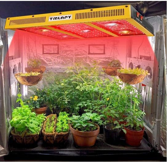 Do Hydroponic Vegetables Taste Different (In-depth Answer)