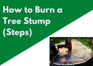 How to Burn a Tree Stump Fast and Safely