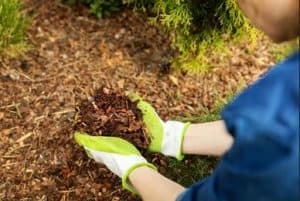 How to Keep Weeds Out of Mulch (Step by Step Guide)