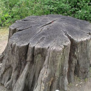 How to Remove a Tree Stump and Roots (Steps) Updated 2021