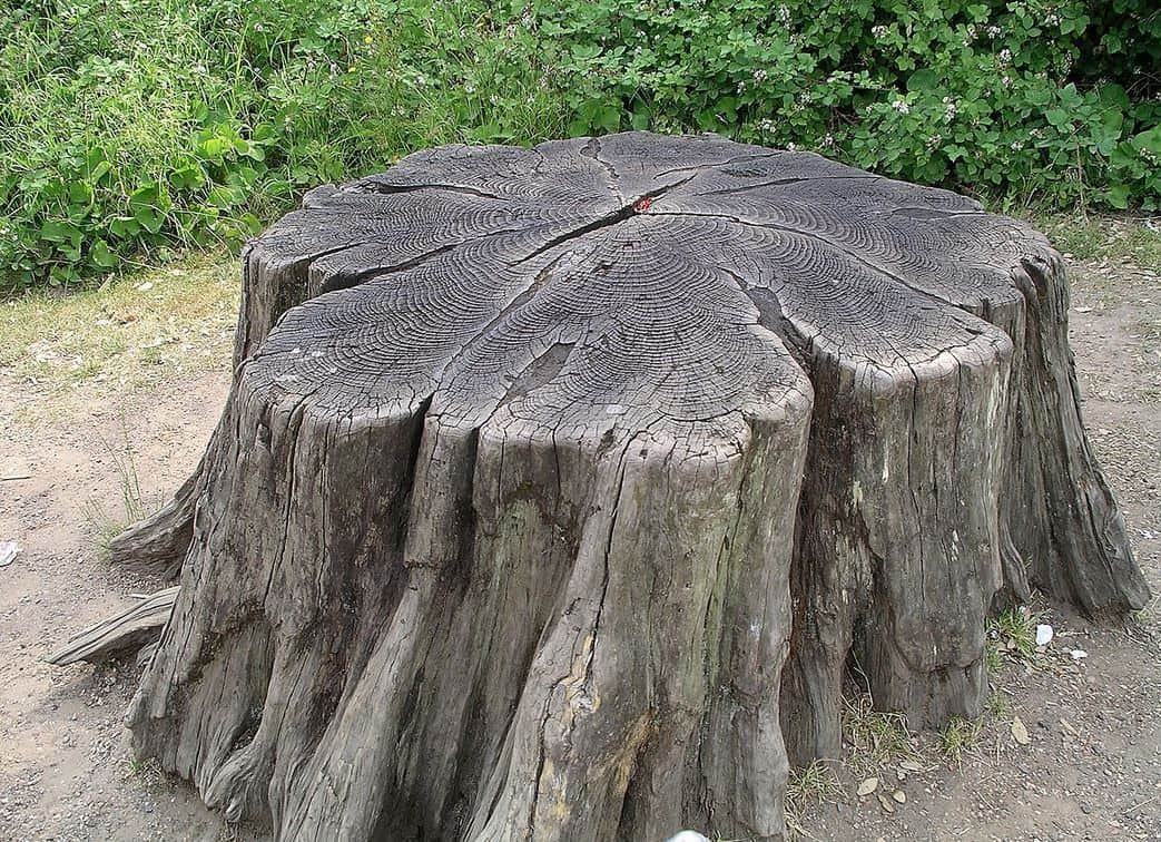 How to Remove a Tree Stump and Roots