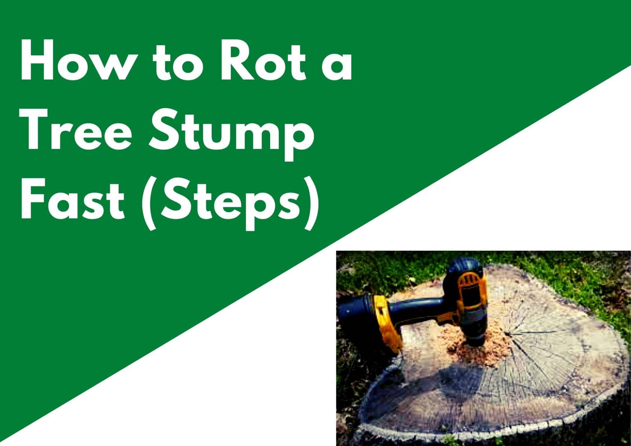 How to Rot a Tree Stump Fast
